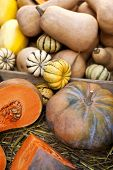 foto of stall  - Close up of pumpkins on a market stall - JPG