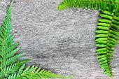 picture of fern  - Green fern leaf border on wood background - JPG