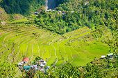 pic of rice  - Rice terraces in the Philippines - JPG