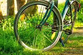 picture of dirt-bike  - Stop the bike in the forest - JPG