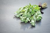 pic of oregano  - A bunch of fresh oregano on a dark stone background - JPG