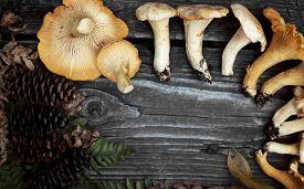 image of chanterelle mushroom  - chanterelle mushrooms - JPG