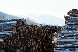stock photo of lumber  - the winter lumbering near mountainous areas Kvarkush - JPG