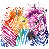 Funny zebra  T-shirt graphics, rainbow zebra illustration poster