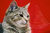 Tabby Cat With Animated Christmas Tree poster