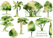 Постер, плакат: Set of hand drawn watercolor trees