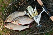 Постер, плакат: Catching Freshwater Fish And Fishing Rods With Fishing Reel