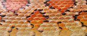 Texture Is A Corn Snake (elaphe Guttata)