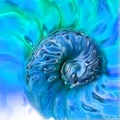 Nautilus Texture