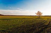 Small Tree On A Green Field