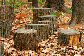 image of cutting trees  - photo of cut tree tronk in the woods - JPG