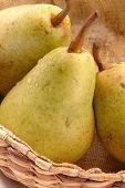 Bartlett Pears Vertical Close