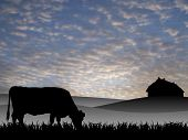 stock photo of workhorses  - cow on pasture at sunset in summer - JPG