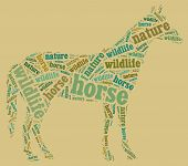 Wordcloud of horse