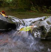 Splashy Leaf