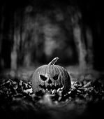 Halloween pumpkin on leaves in woods in black and white poster