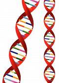 Hélice do DNA