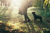 Portrait Of Purebred Dog French Bulldog. poster