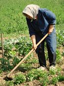 Agricultural Work