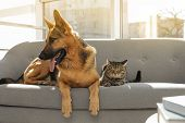 Cat And Dog Together On Sofa Indoors. Funny Friends poster