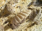 Shell In The Rocks