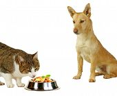 Cat´s Only, A Cat Is Eating A Delicious Meale  While A Dog Is Only Looking