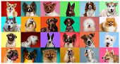 Young Dogs Are Posing. Cute Doggies Or Pets Are Looking Happy Isolated On Colorful Or Gradient Backg poster