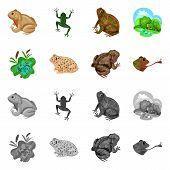 Vector Illustration Of Wildlife And Bog Sign. Set Of Wildlife And Reptile Stock Vector Illustration. poster