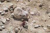 Close Up Of Stains Of Fresh Blood On Crushed Stone Chippings In Desert. Murder With The Use Of Stone poster