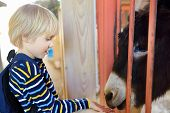 Little Boy Feeding Donkey. Child In Petting Zoo. Kid Having Fun In Farm With Animals. Children And A poster