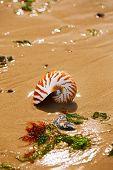 British summer  beach with nautilus pompilius sea shell poster