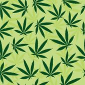 Green Marijuana Leaf Background