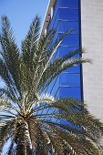 Palm Tree Against Glass And Iron Business Buildings