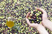 Olive oil and olives in hand