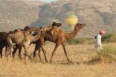 Hot Air Balloon At The Pushkar Camel Fair