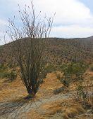 California Desert 2