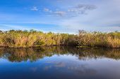 image of marshlands  - Everglades pond seen from the Anhinga Trail - JPG