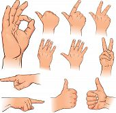 Various Poses Of Human Hands