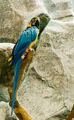 Colorful Maccaw
