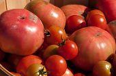 Bushel Of Red Tomatoes