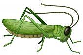 Illustration of a grasshopper on a white background