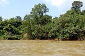 Taman Negara - River View
