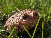 Toad In Grass 3 Of 3