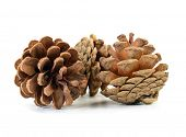 Christmas decoration pine cone over white backdrop