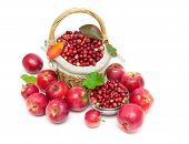 Ripe Apples And Cranberries Isolated On White Background