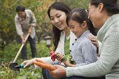 Happy family harvesting vegetables in garden