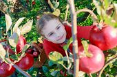 foto of orchard  - Apple orchard  - JPG