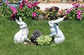 image of hare  - two hares in cabbage hares in a kitchen garden hares in the summer a sunny day cheerful hares hares on a grass - JPG