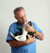 Mature vet with a pet cat - paw in bandage poster