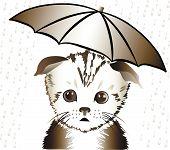 The cat Under An Umbrella